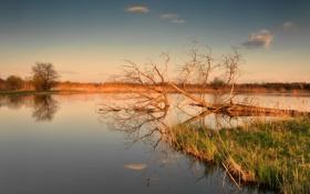 Обои закат, озеро, дерево, сухое