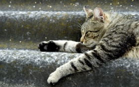 Картинка кот, животное, лапки, лежит, ступеньки, отдыхает