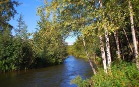 Обои деревья, река, течение, листва, берега