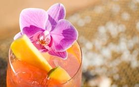 Обои коктейль, лед, фрукты, орхидея