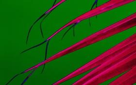 Обои листья, линии, растение, природа, цвет