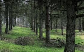Картинка трава, деревья, природа, дерево, фотографии, леса, места