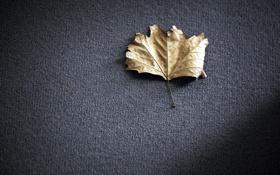 Обои фон, лист, макро