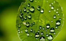 Обои зелень, капли, макро, природа, фото, фон, green