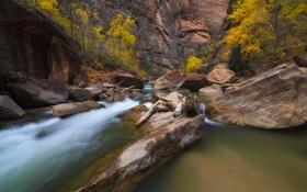 Картинка камни, река, скалы, юта, осень, ущелье, деревья