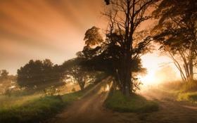 Обои дорога, туман, природа, свет, утро, дерево