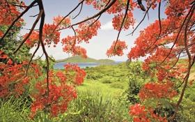 Картинка листья, ветки, залив, трава, природа, горы, дерево