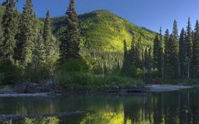 Обои лес, природа, река, Канада