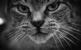 Картинка глаза, кот, усы, фон, котэ