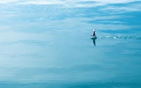 Картинка океан, птица, Арктика