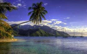 Обои море, горы, тропики, пальмы, берег, обработка, яхты