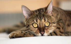 Картинка кот, шерсть, кошка