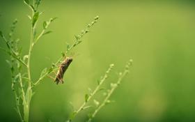 Обои лето, трава, природа, кузнечик