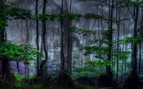 Картинка лес, листья, деревья, ветки, природа, туман, заросли