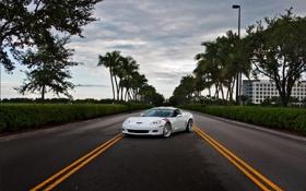 Картинка дорога, белый, небо, облака, полосы, пальмы, разметка