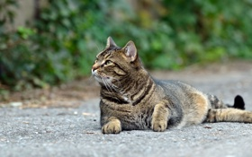 Картинка кот, отдых, взгляд, кошка