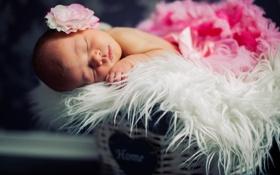 Картинка цветок, корзина, сон, ребёнок