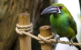 Обои птица, цвет, перья, веревка, клюв