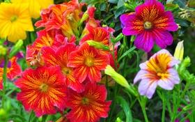 Обои макро, природа, лепестки, сад, луг