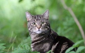 Обои кот, листья, взгляд