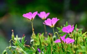 Обои поле, природа, лепестки, сад, стебель
