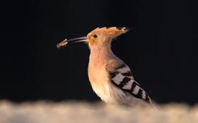 Картинка фон, птица, жук