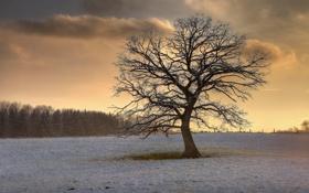 Картинка поле, снег, природа, дерево