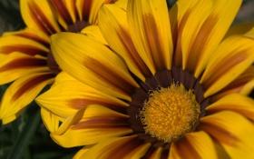Обои лепестки, пятна, жёлтые, расцветка