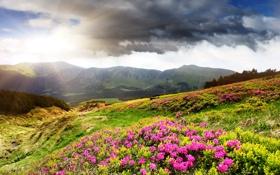 Обои азалия, долина, лучи солнца, горы, тучи, луга, цветы