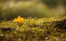 Картинка осень, трава, макро, лист, роса, блики