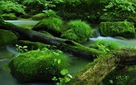 Обои река, камни, мох, бревна