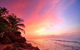 Обои palm, beach, Rincón, ocean, Puerto Rico, sunset