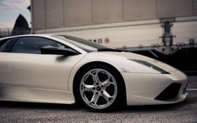 Обои белый, Lamborghini, white, ламборджини, Murcielago, ламборгини, LP640
