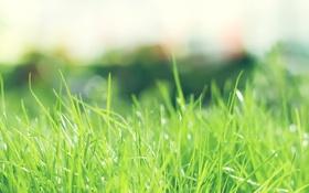 Обои зелень, лето, трава, солнце, природа, день