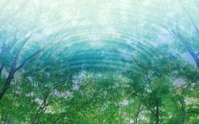Обои отражение, свет, вода, листва, Деревья