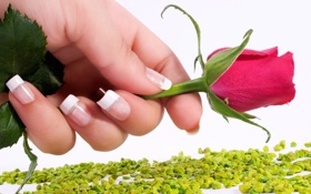 Картинка ногти, розовый, цвет, роза, цветок, французский, рука