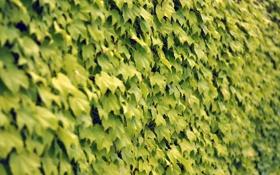 Картинка растения, 2560 x 1600, листья, природа
