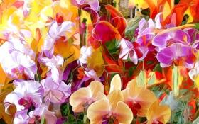 Обои линии, цветы, абстракция, краски, лепестки, орхидея, штрих