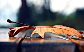 Обои осень, лавочка, лист, клен