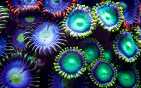 Картинка разноцветно, подводные растения, причудливость