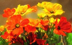 Обои красные, букет, жёлтые, цветы, маки