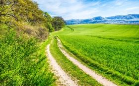 Обои Дорога, трава, холмы