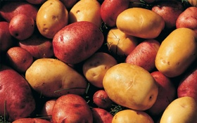 Обои Potatoes, картофель, фон