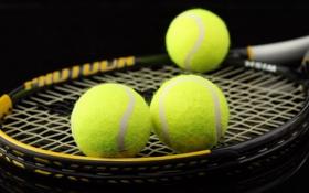 Картинка ракетка, мячи, спорт