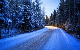 Обои зима, дорога, лес, солнце, снег, деревья, поворот