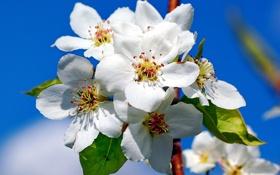 Обои небо, веточка, весна, яблоня