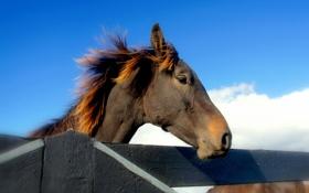 Обои небо, забор, конь