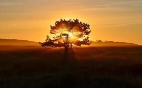 Обои пейзаж, закат, дерево