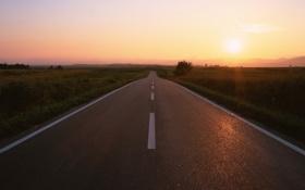 Обои дорога, поле, солнце, деревья, закат, разметка