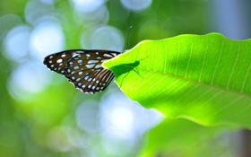 Обои тень, блики, лист, бабочка